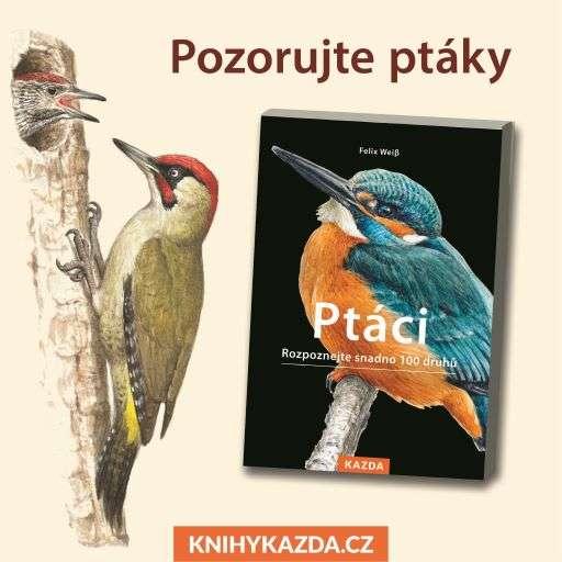 Portréty jednotlivých druhů v knize Ptáci doplňují pozoruhodná fakta a zajímavosti ze života opeřenců
