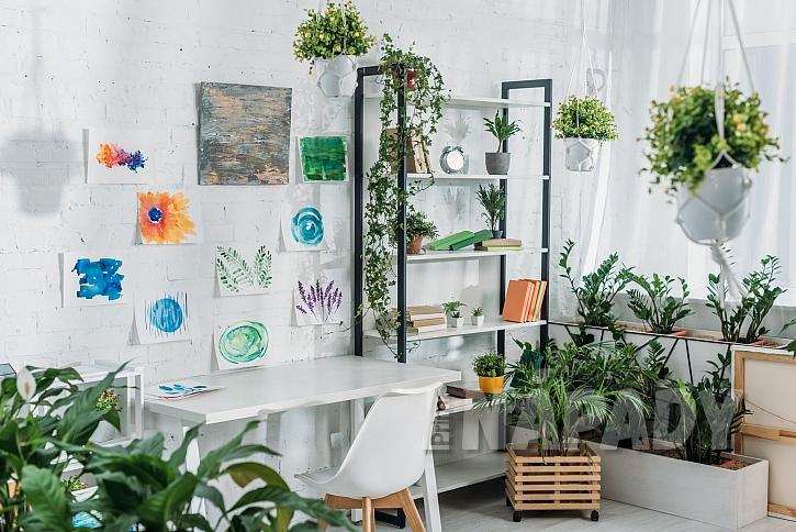 Ochrana pokojových květin proti škůdcům se nesmí podceňovat (Zdroj: Depositphotos.com)