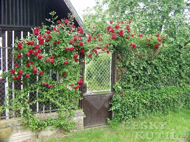 Některé právní informace týkající se plotů