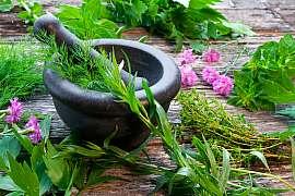 Čerstvé bylinky jsou v domácnosti neocenitelné