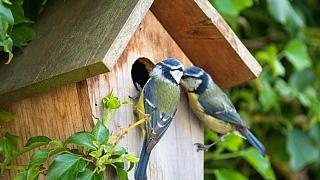 Ptačí budka: Jak udělat na zahradě bydlení pro užitečné ptáčky