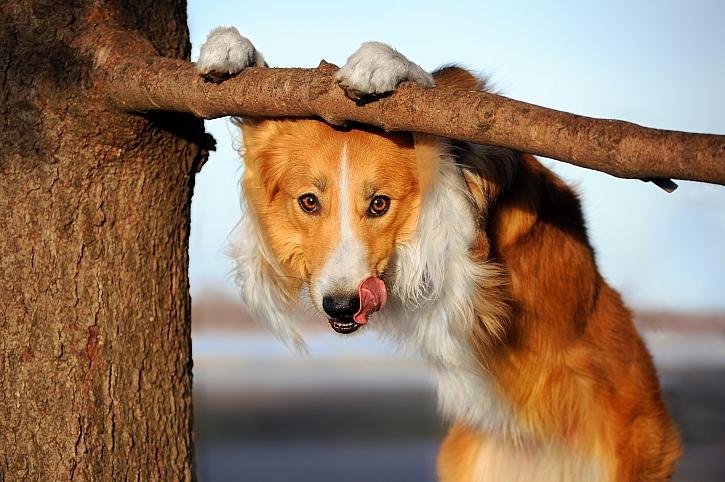 Pes visí na větvi