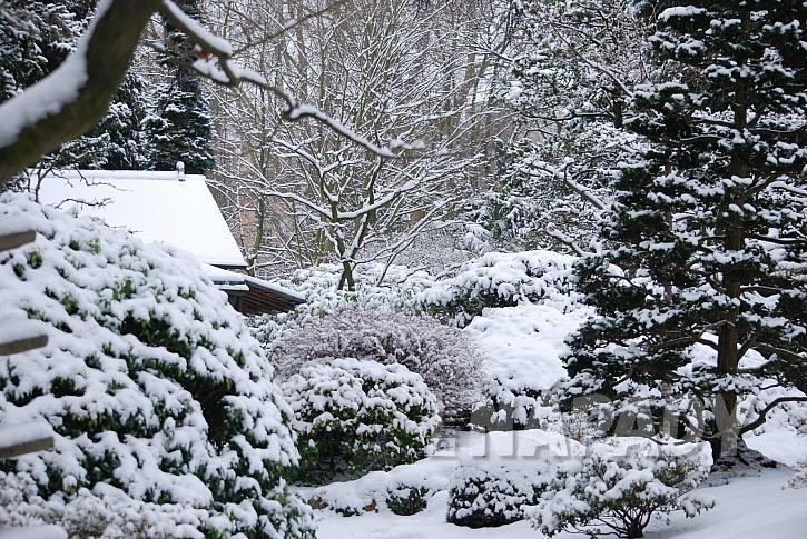 Větve stromů pod sněhem