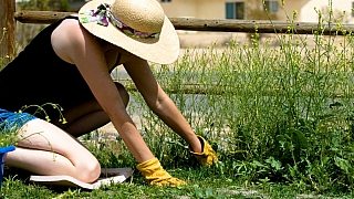 Letní zahrada: Plevel je pěkný prevít, ale může být i užitečný