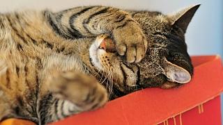 Jak vykouzlit nejlepší fotky (nejen) domácích mazlíčků: Využijte každou příležitost
