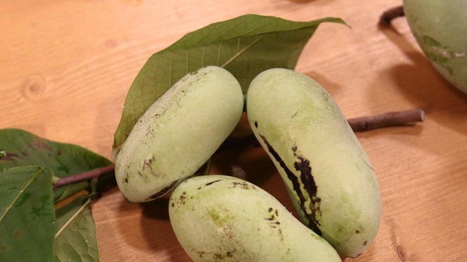 Muďoul: Exotický krasavec s krásnými květy achutnými plody