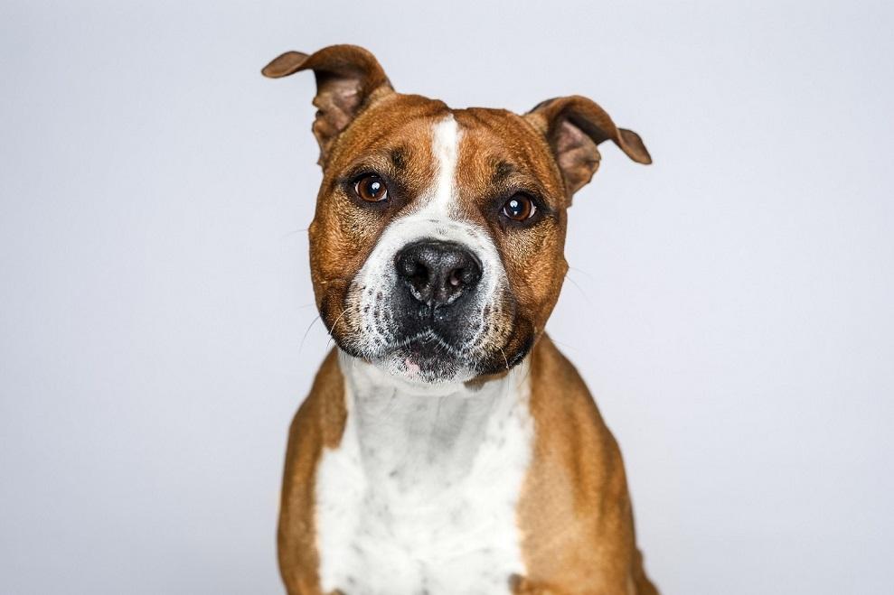 Jak správně poznat potravinovou alergii u psa?