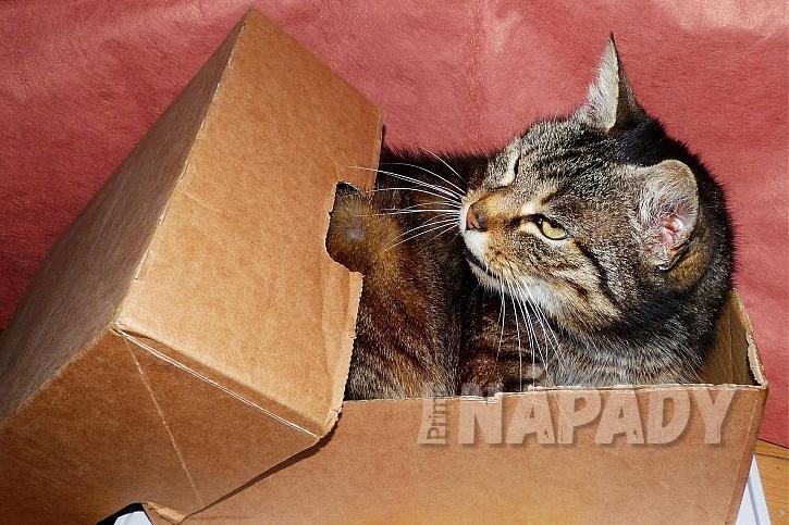 Pelíšek pro kočku: čím je krabice menší, tím je kočka spokojenější
