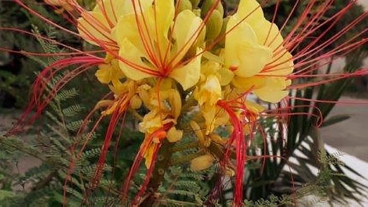 Žlutá tropická rostliny
