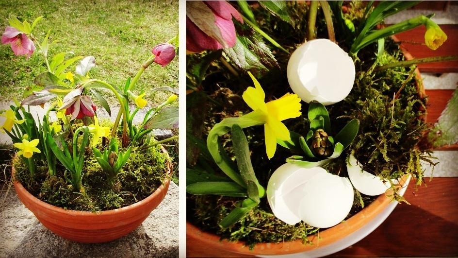 Jak si udělat jarní minizahrádku v květináči
