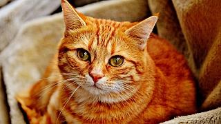 Kočka domácí: Jak zabránit žaludečním problémům?