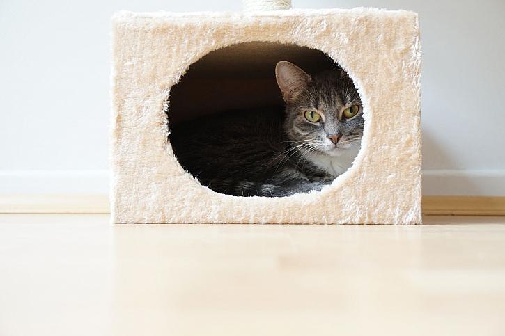Kočičí domeček
