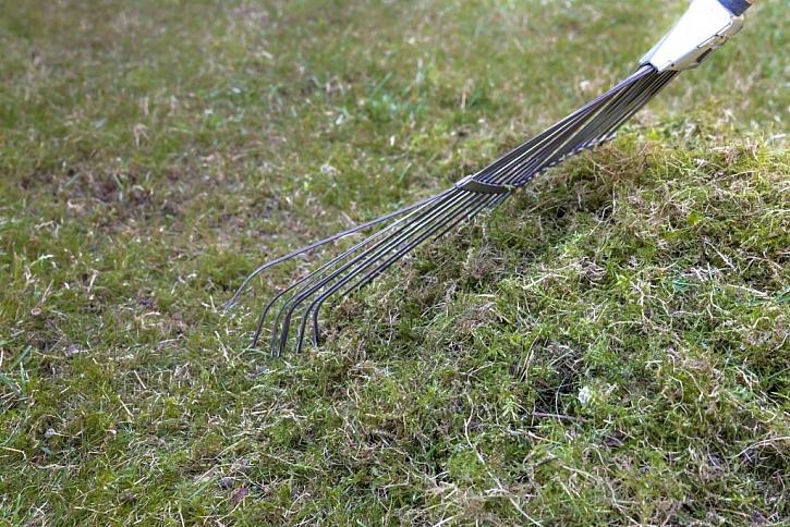 Ruční hrabání mechu z trávníku