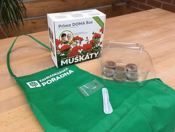 Prima DOMA Box MUŠKÁTY