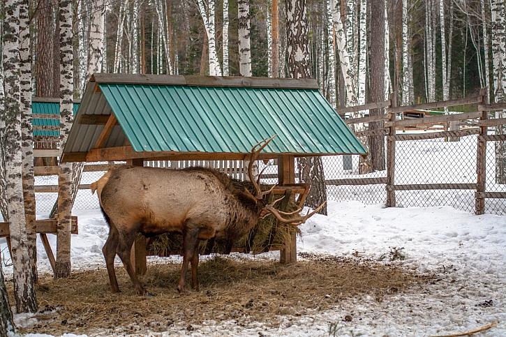 Nepleťte si krmení lesní zvěře a na rybnících s vynášením odpadků (Zdroj: Depositphotos)