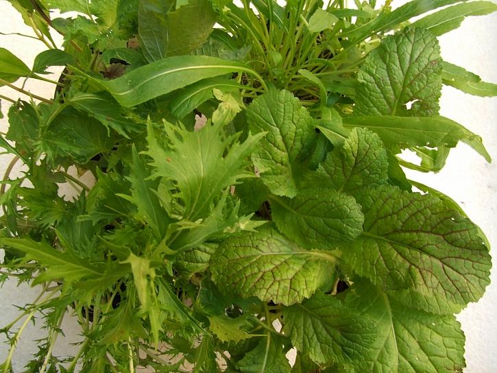 Směs asijských zelenin