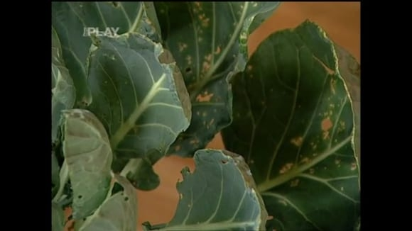Škůdci a choroby na zahradních rostlinách