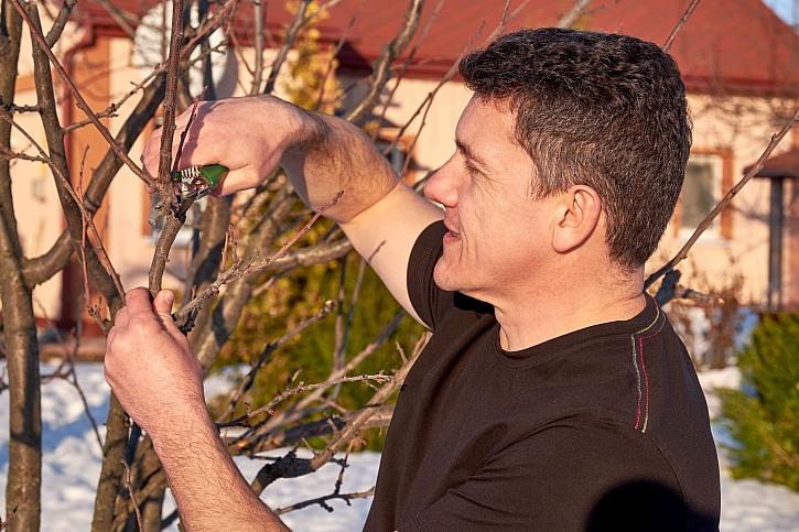 Pravidla pro zimní ořezávání dřevin by měl znát každý zahradník (Zdroj: Depositphotos)