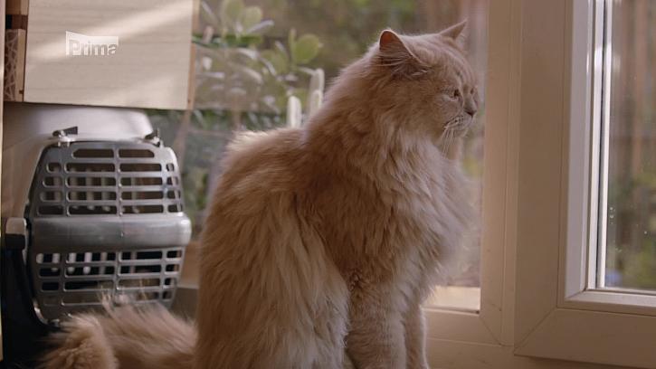 Jak upravit byt stárnoucí kočce? (Zdroj: Úprava bytu pro stárnoucí kočku)