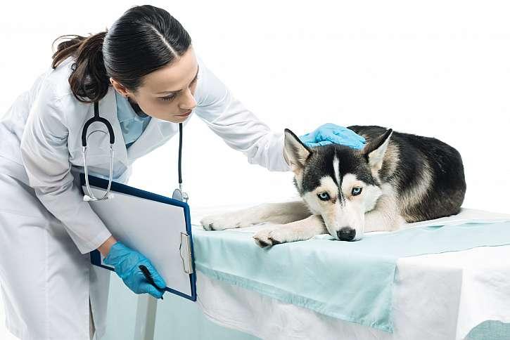 Veterinární lékař utěšující psa