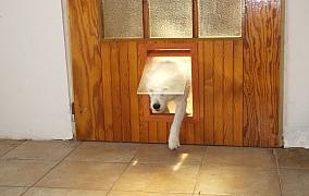 Jak udělat do dveří průlez pro psa