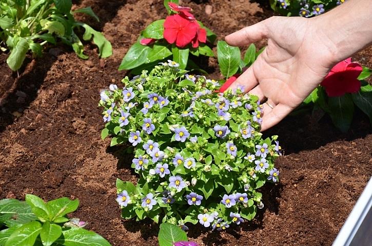 Voňavé bylinky z vlastní zahrady chutnají