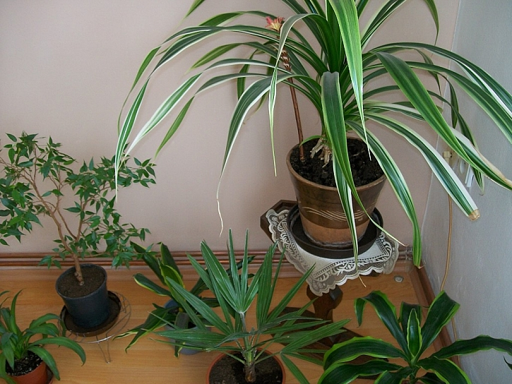 Shrňme si OBECNÉ ZÁSADY pro pěstování pokojových rostlin v zimě: