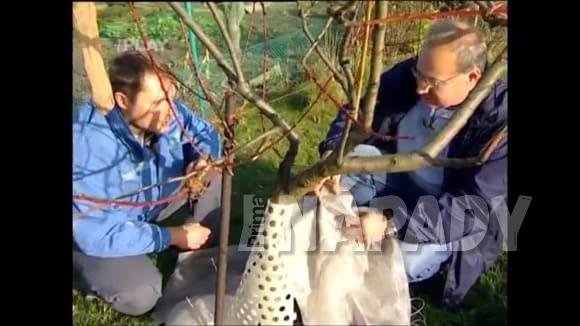 Ochrana kmenu stromů proti okusu