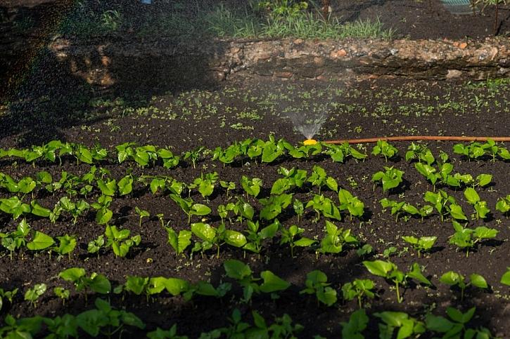 Závlaha zeleninové zahrádky automatickým systémem