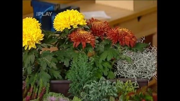 Truhlíkové rostliny na podzim