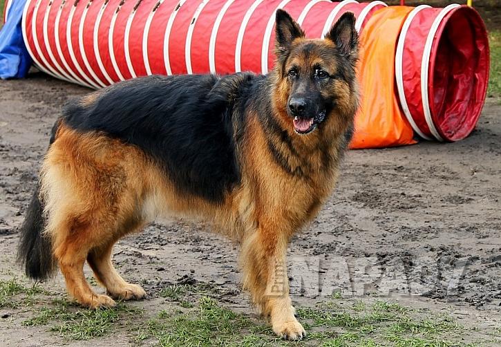 Báječný sport pro voříšky i psí šampiony 2