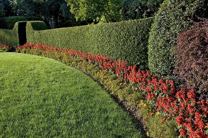 Zelený plot s květinami