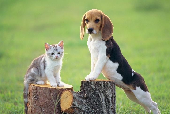 Šikovné pojištění pro psy a kočky