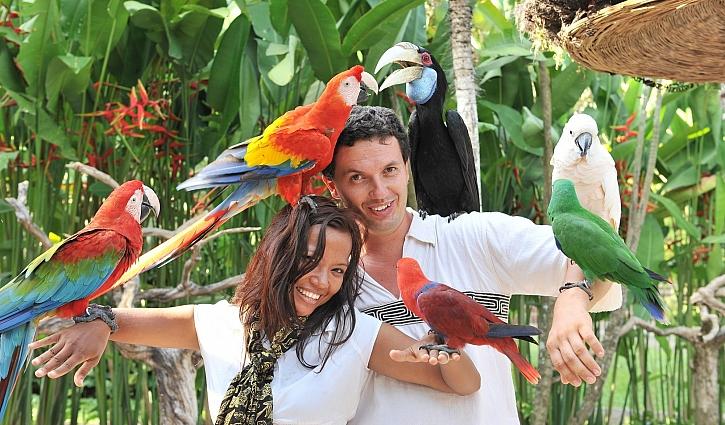 Exotické druhy ptactva jsou velmi oblíbené pro chov v zajetí (Zdroj: Depositphotos)