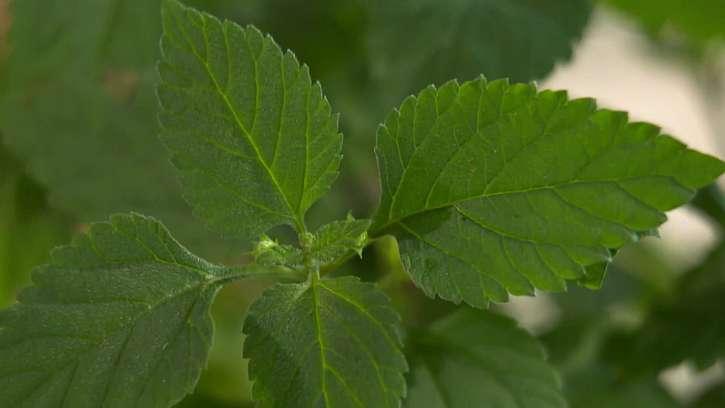 Detail rostliny