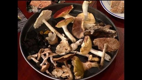 Zpracování hub a chorošů
