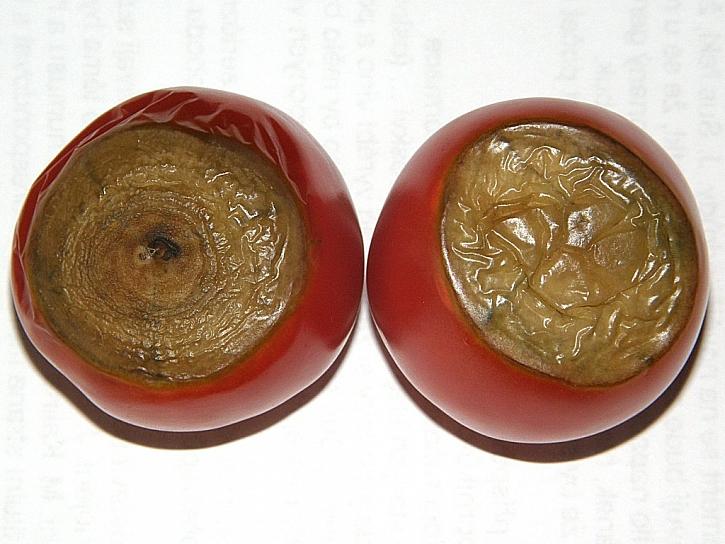 Proč rajče vápník nepřijímá