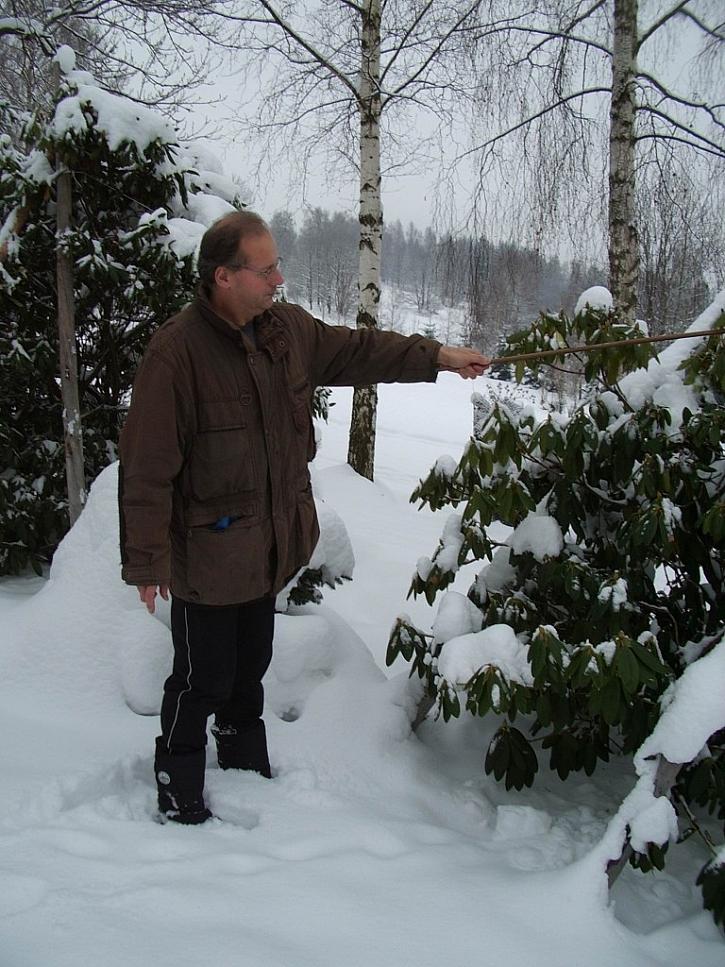Vysoká vrstva sněhu by mohla vrcholky stromků poškodit, mohly by se rozlomit