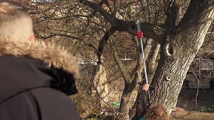 Řezání větví přímo ze země