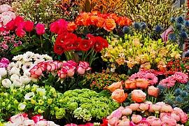 Květomluva pro zamilované: Nechte za sebe mluvit květiny