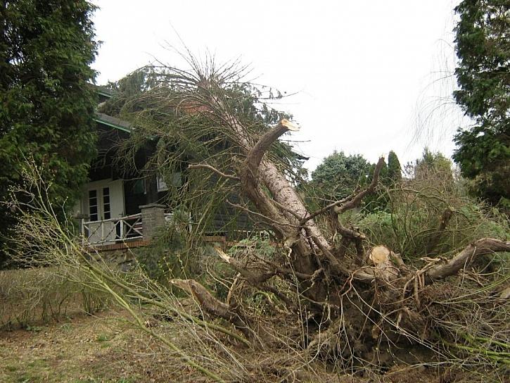 Padající stromy patří mezi živelní rizika, ta bývají automatickou součástí každé smlouvy k pojištění chat a chalup.