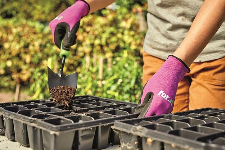 předpěstování zeleniny