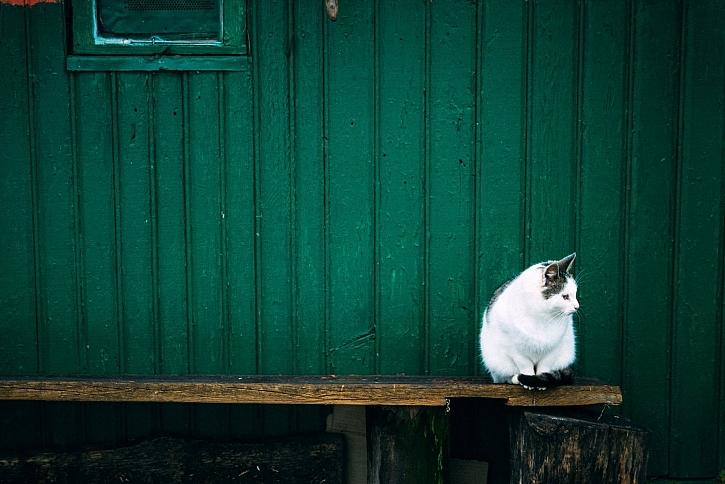 Sedící kočka