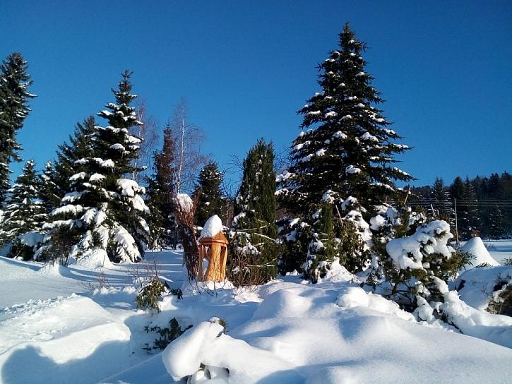 Dřeviny v zimě ohrožuje okus zvěř, sníh a mráz (Zdroj: Jan Kopřiva)