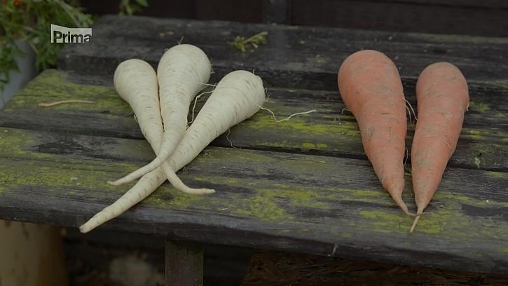 Kdy vysévat a vysazovat ozimou zeleninu?