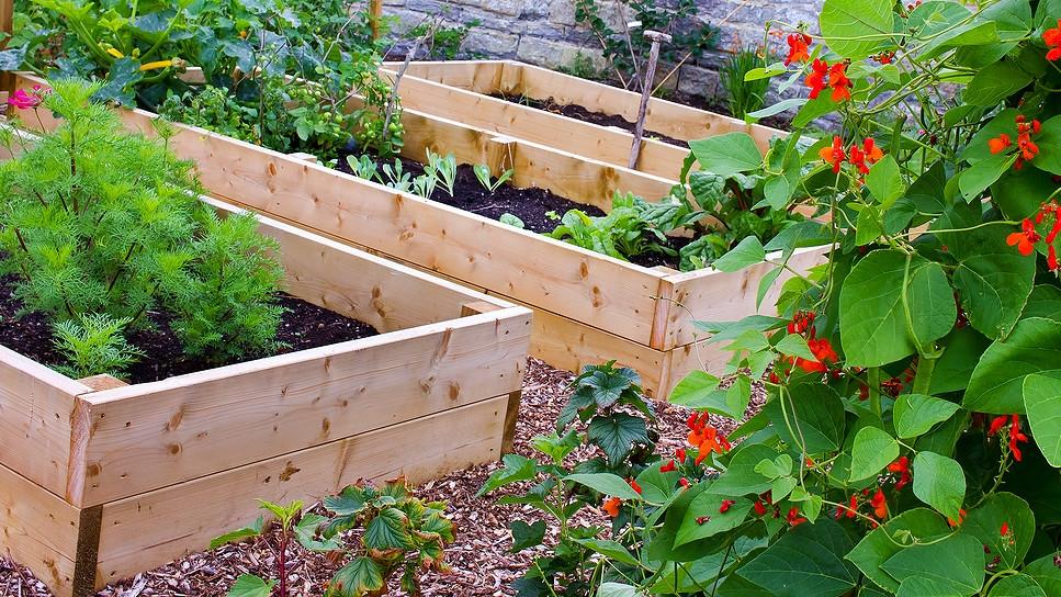 6 tipů pro začínající zahradníky, kteří chtějí pěstovat zeleninu