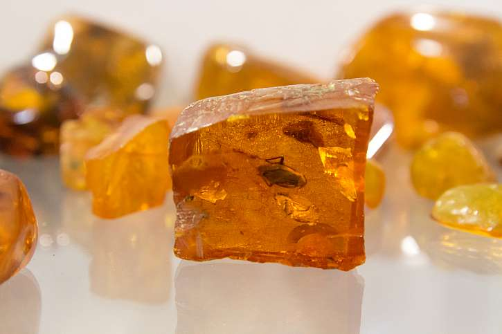 Jantar má kromě obliby u šperkařů také velký význam pro paleontologii