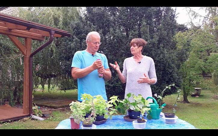 Chcete, aby vám rostliny lépe dýchaly? Použijte lesk na listy.