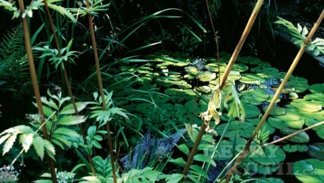 Fauna a flóra ve vodě