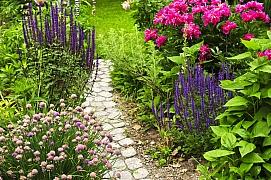Co musíme udělat s trvalkami na konci léta, aby nám na zahradě vydržely mnoho let?